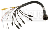 Click for a larger picture of Wire Harness for MyChron3 Auto Dash